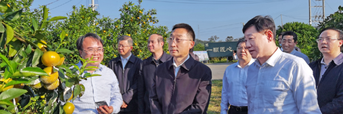 广西壮族自治区党委书记刘宁莅临鸣鸣果园调研