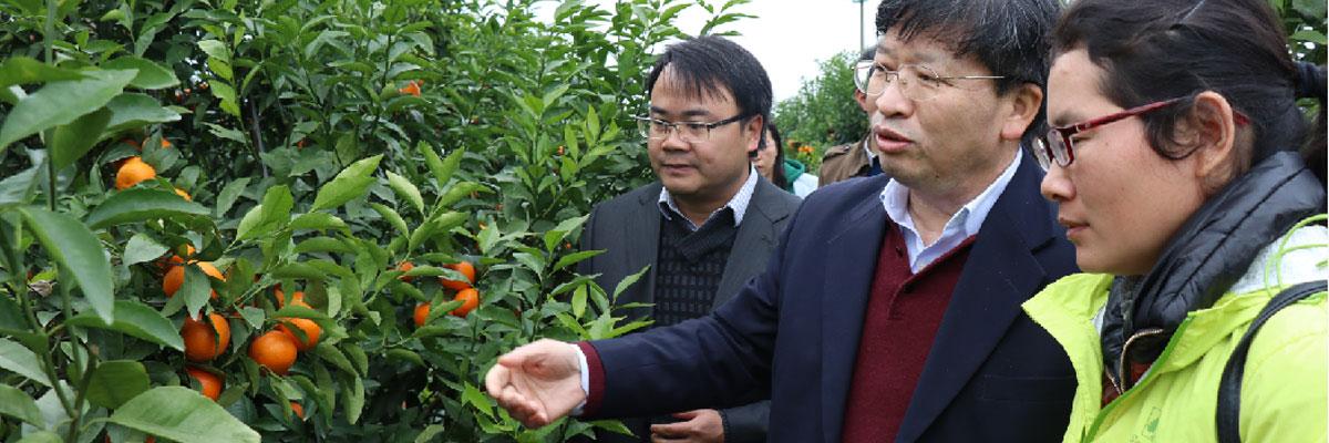 中国工程院院士、华中农业大学校长邓秀新(中)到88必发娱乐官网88必发娱乐最新网址调研指导。