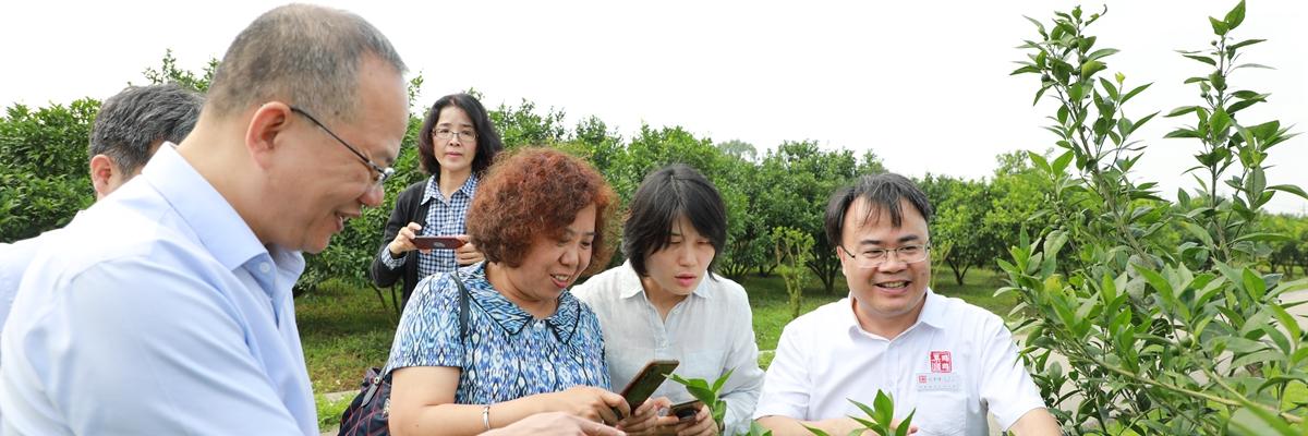 农业农村部信息中心副主任蔡萍到鸣鸣果园调研