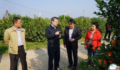 2018年1月19日,南宁市副市长刘为民(左二)到鸣鸣果园调研指导。