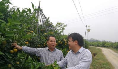 2017年11月6日,南宁市武鸣区委书记韦敏宏(左)到鸣鸣果园调研指导。