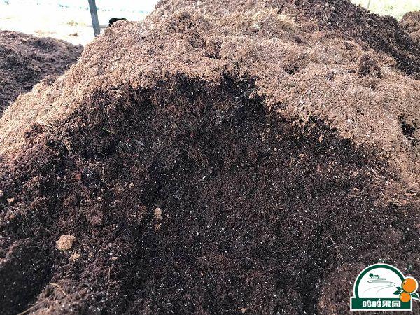 优质的基土配方,保证健康的无毒苗木