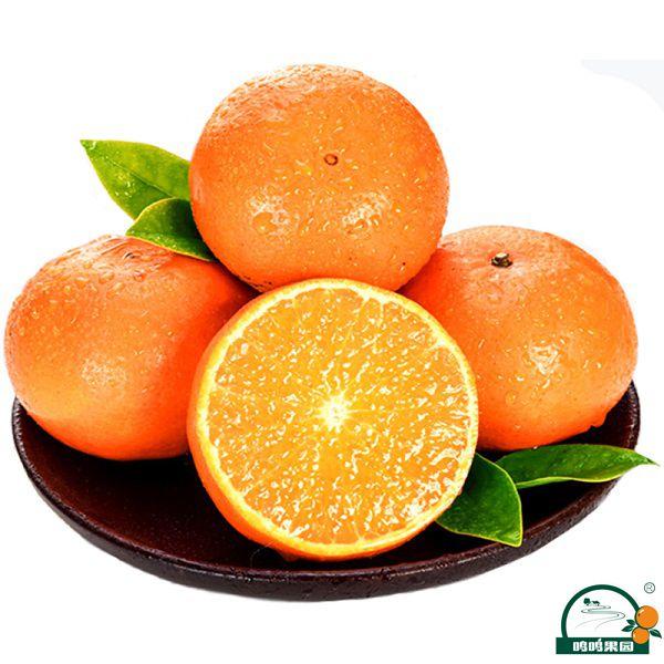 广西武鸣沃柑是如何一步步成为广西柑橘特色品