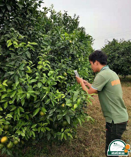 农场管理人员使用系统拍照上传