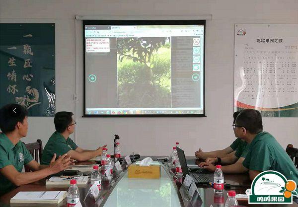 鸣鸣果园基于信息系统的工作汇报