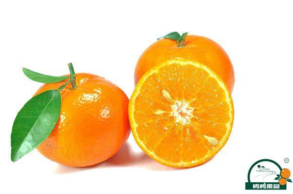 柑橘皇后,沃柑