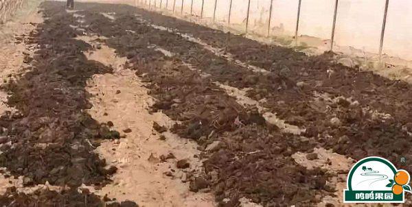 种植需要的农家肥