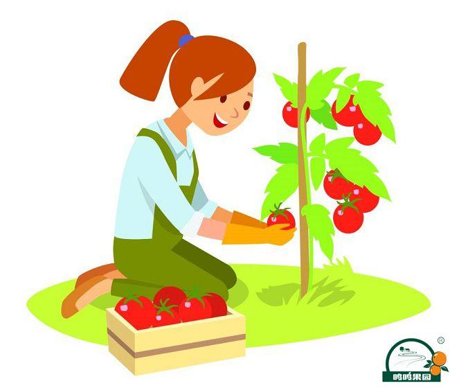 果树收货的季节!
