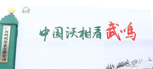 中国沃柑看武鸣