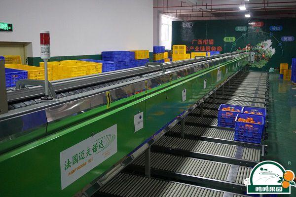 法国进口柑橘分选线