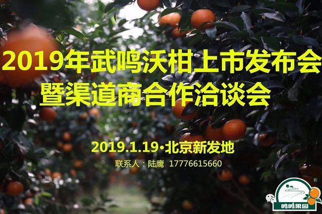 武鸣沃柑2019年上市发布会