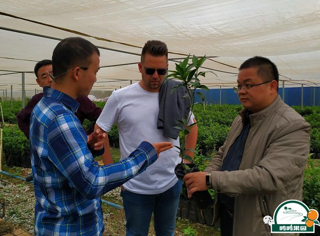 Juan Puchades Ricart一行了解苗木情况