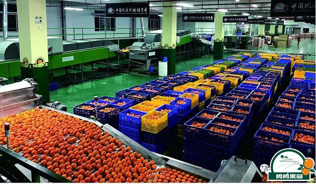 88必发娱乐官网88必发娱乐最新网址的柑橘表面质量瑕疵分选生产线