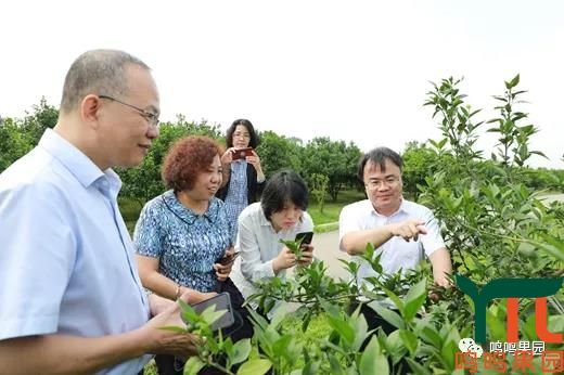 数字农业︱农业农村部信息中心副主任蔡萍到鸣鸣果园调研
