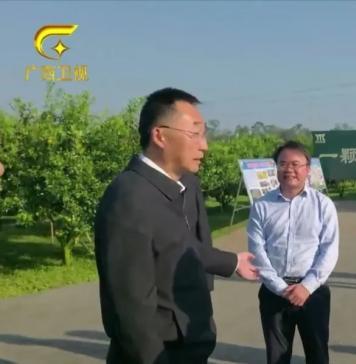产业兴旺   广西壮族自治区党委书记刘宁莅临鸣鸣果园调研